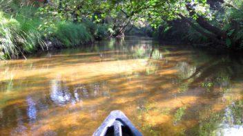 Mesplet mios (Gironde - bassin Arcachon) : Descente de la leyre en canoe, kayak
